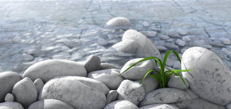 Plant and Stones